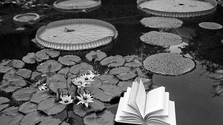 """""""Уроки ботаники"""". Автор фото – Флор Гардуньо"""