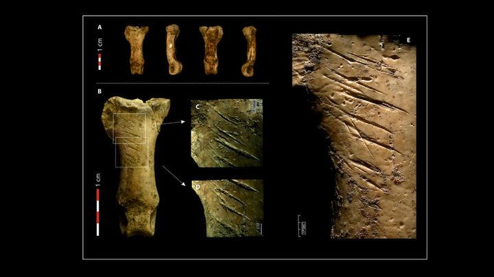 """Найдено """"последнее"""" украшение неандертальцев"""