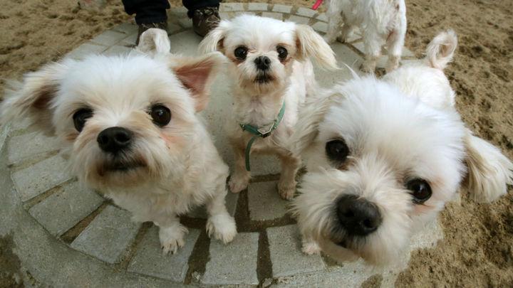Учёные выяснили, что одомашнивание предков собак произошло дважды √ в Европе и в Азии.