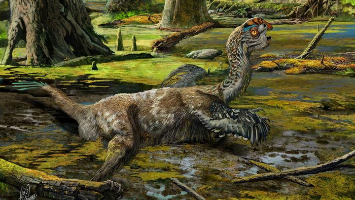 Образцы мягких тканей динозавров, сохранившиеся в течение десятков миллионов лет, долго оставались загадкой для исследователей.