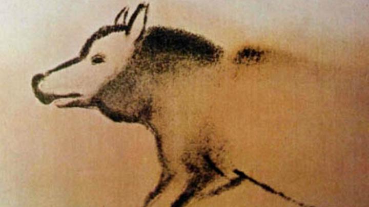 ДНК древнего сибирского волка заставила опять пересмотреть историю возникновения собак
