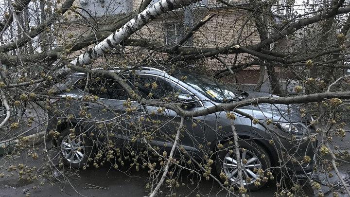 Москвичам советуют оставаться дома