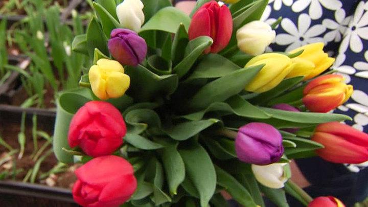 Цветы, стихи и песни: женщинам напоминают, насколько они прекрасны