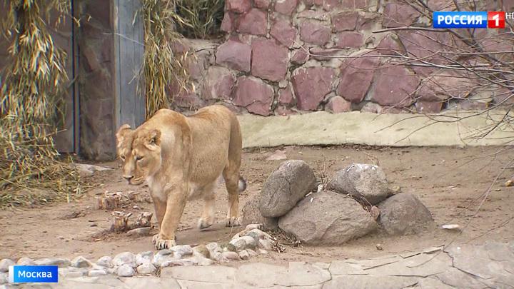 Московский зоопарк приглашает на сеансы кормления животных