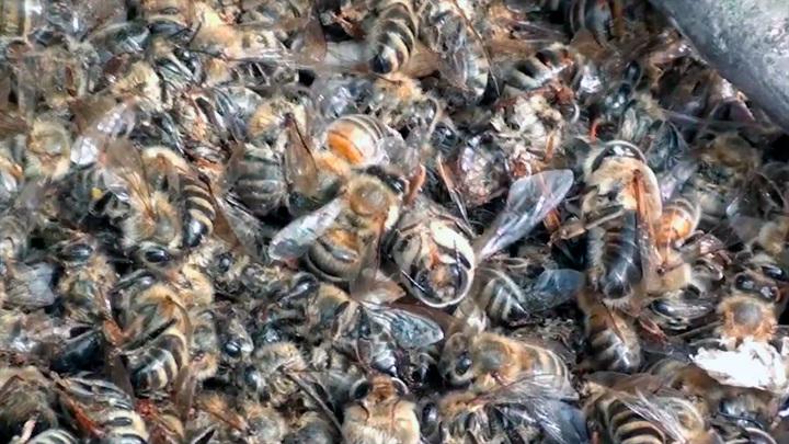 Из Ростовской области на Украину пытались незаконно переправить 2 млн пчел