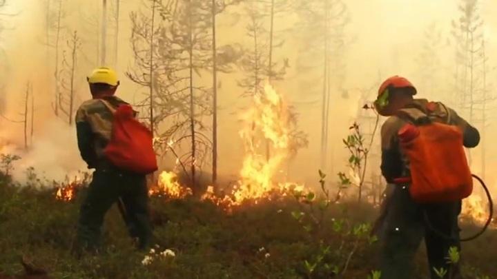 В России за сутки ликвидировано 75 лесных пожаров