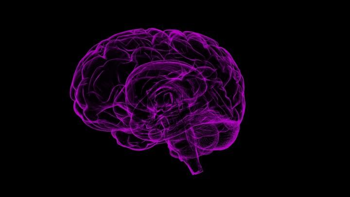 Учёные выявили клетки, отвечающие за когнитивную гибкость.