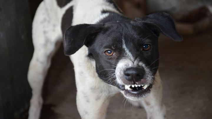 Стая бродячих собак спасла женщину от насильника