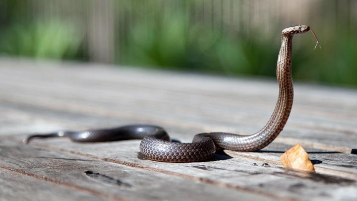 Гадюки проснулись: как выгнать змей с дачного участка