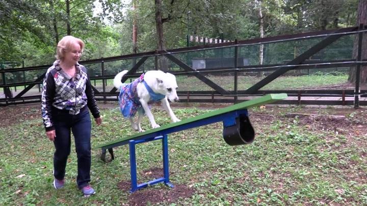 Современные площадки для прогулок с собаками появились в четырех районах Москвы