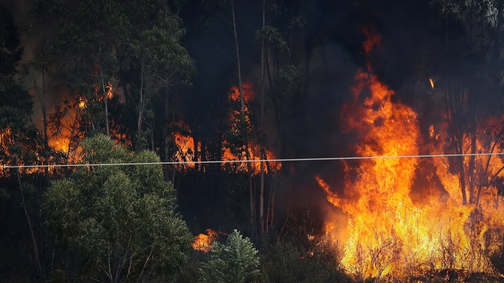 Из-за пожаров в популярной у туристов Андалусии эвакуировали 2,5 тысячи человек