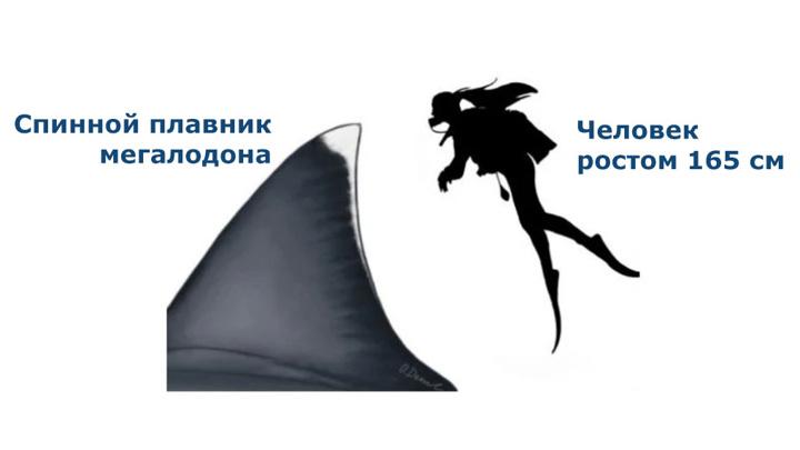 Человек и плавник древнего монстра глубин. Перевод Вести.Ru.