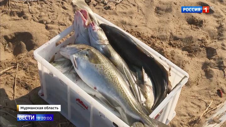 Не только хобби, но и работа: рыбаки-любители смогут продавать свой улов