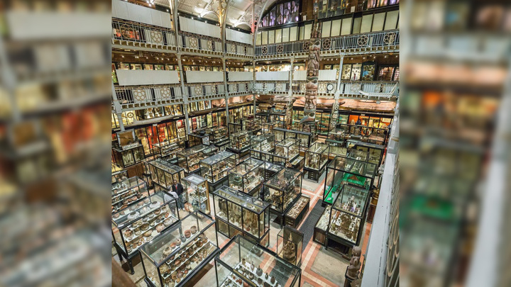 pittriversmuseum