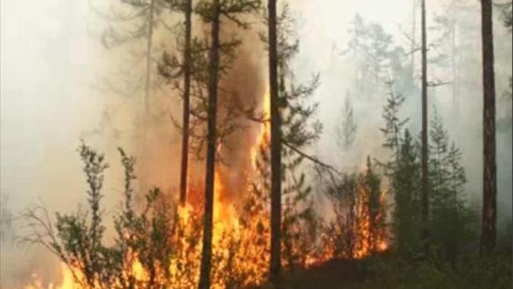 В Красноярском крае снова горит тайга
