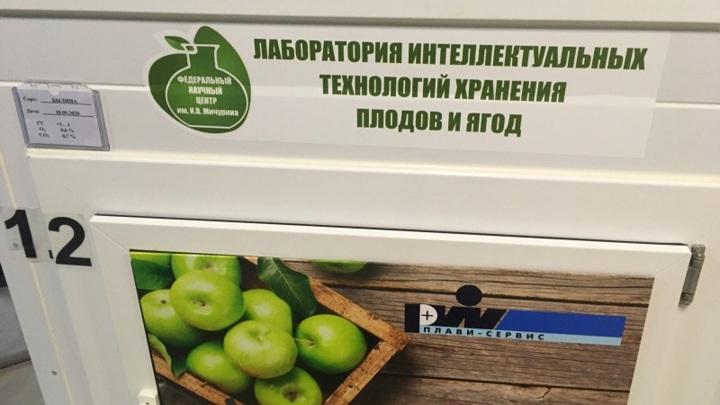 В Мичуринске открыли лабораторию интеллектуальных технологий хранения плодов и ягод