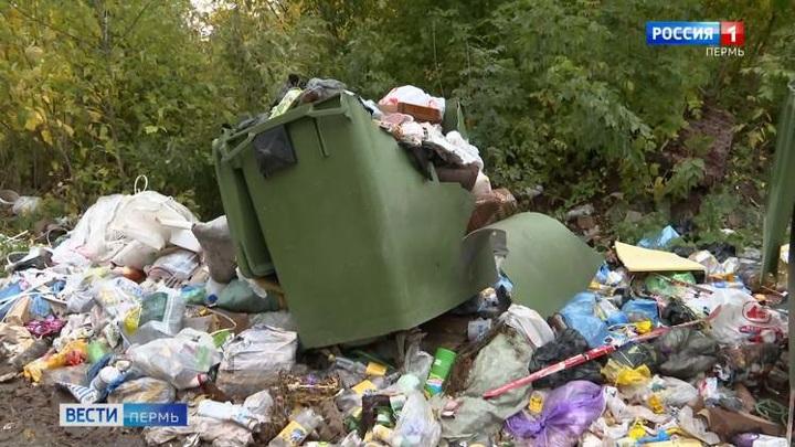 Контейнеры раздора: пермяки жалуются на грязные мусорные площадки и полчища крыс
