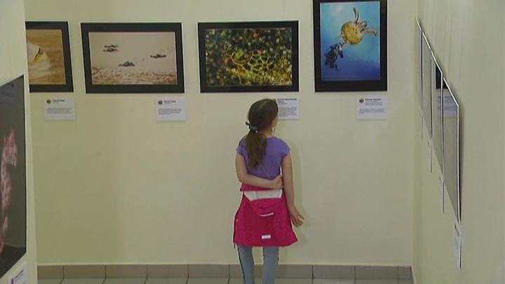 В Москве начался традиционный фестиваль подводной фотографии