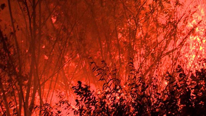 Около 10строений горят в селе Мечетка в Воронежской области