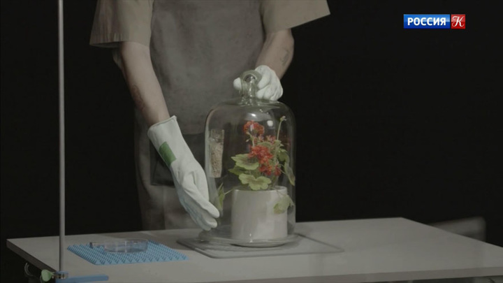 На киностудии имени Горького снимают сериал о жизни комнатных растений