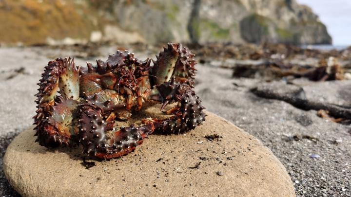 Глава Минприроды: животные на Камчатке погибли из-за токсичных водорослей