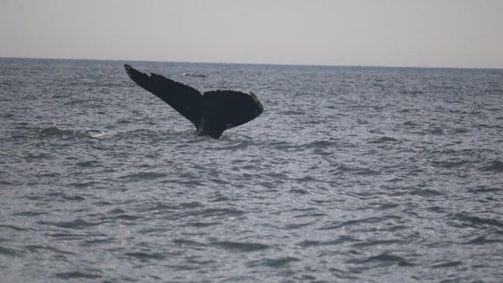 У берегов Камчатки выбросило 19-метрового кита