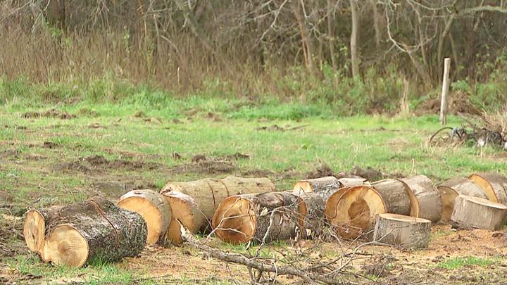 В Пензенской области мужчину осудили за три срубленных дуба
