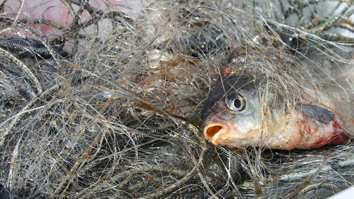 На Ириклинском водохранилище за незаконную рыбалку задержан браконьер