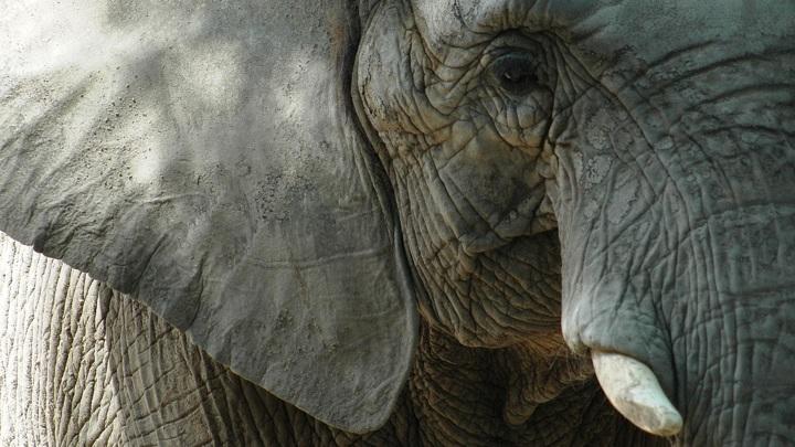 Слон, жираф и носорог: казанский зоопарк поделился планами на весну-2021