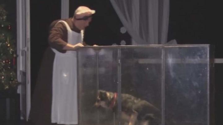 """В драматическом театре """"Мастеровые"""" проводят пробы собак на роль Шарика в """"Собачьем сердце"""""""