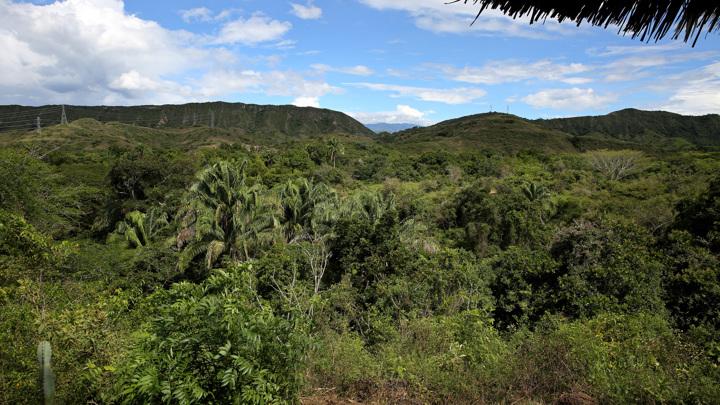 Растение из тропических лесов может стать ключом к безопасному лечению рака.