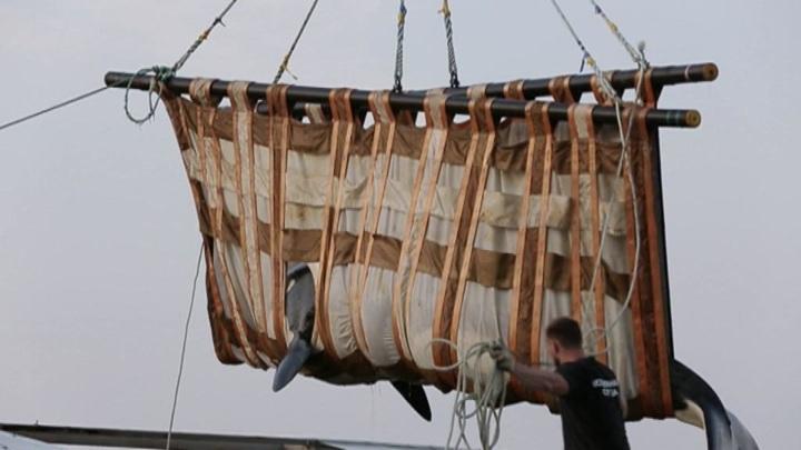 Спасение из китовой тюрьмы: зоозащитники рассказали подробности операции