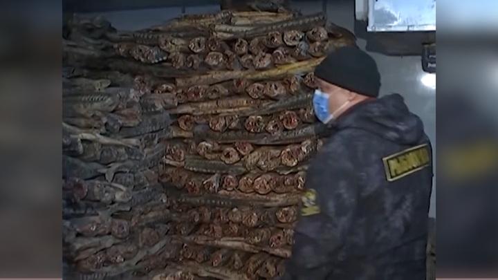 В Москве нашли склад с 10 тоннами краснокнижного осетра