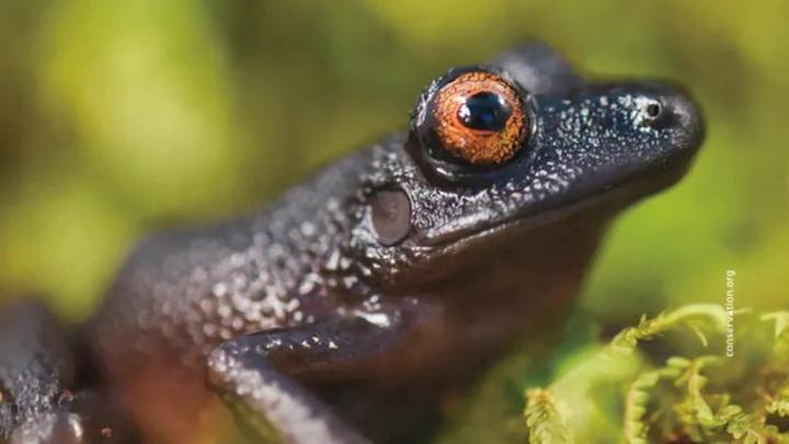 В Андах в Боливии обнаружено более 20 неизвестных животных и растений