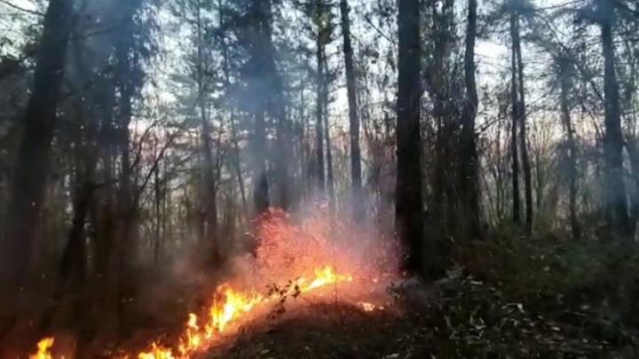 Пензенская область заняла первое место в стране по оперативности тушения лесных пожаров