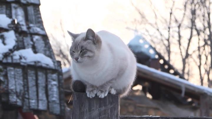 У кошек умершей женщины нашли коронавирус