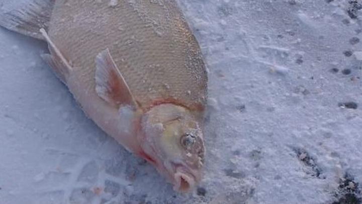 Экологи выяснили, почему в пруду ЗАТО Звездный погибла рыба