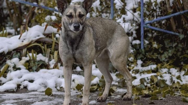 В Самарской области разрабатывают закон об эвтаназии бездомных животных