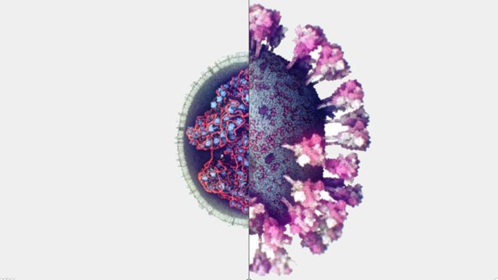 Ученые сделали первое 3D-фото коронавируса