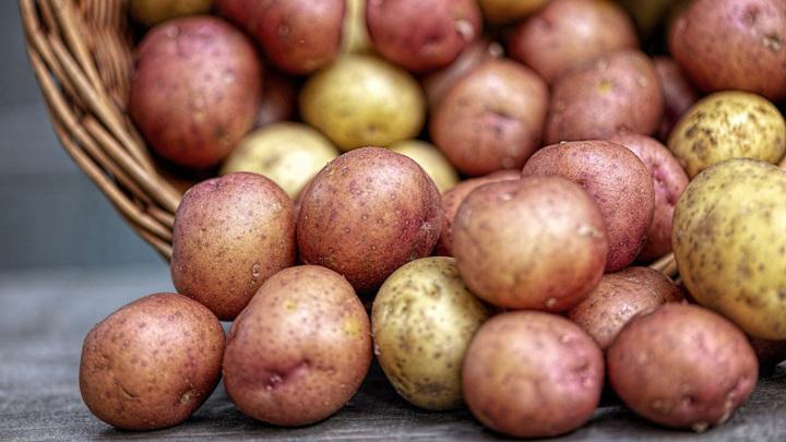 Россия запретила поставку картофеля из одного региона Египта