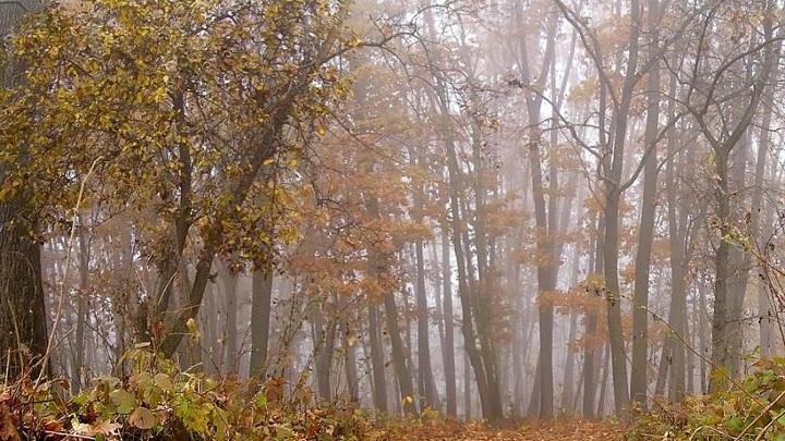 Охотники избили егеря в Апшеронском районе Кубани