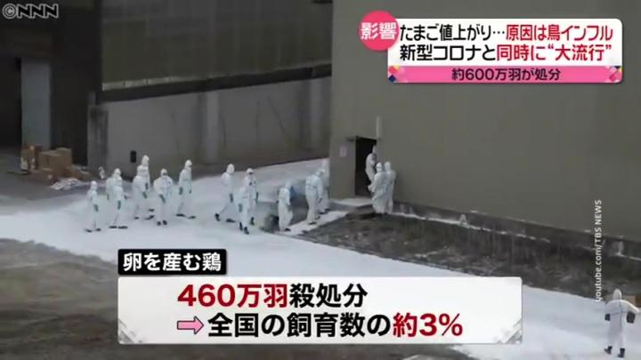 Более 800 тысяч кур уничтожат в Японии из-за вспышки птичьего гриппа