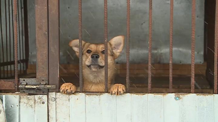 Прокуратура Московской области проводит проверку информации о отравлении собак