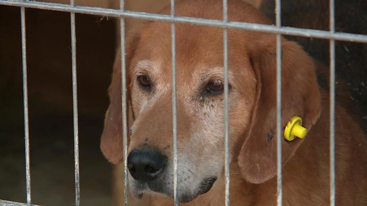 Минстрой разработал правила строительства приютов для животных
