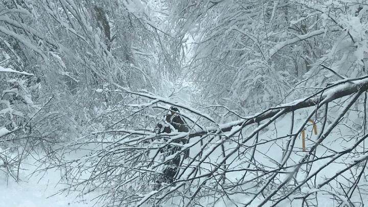 Борьба по всем фронтам: в сочинском Кавказском заповеднике устраняют последствия снегопада