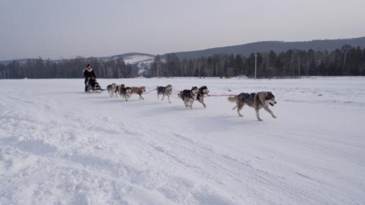 ОНФ в Бурятии организовал катание на собачьих упряжках для детей-инвалидов