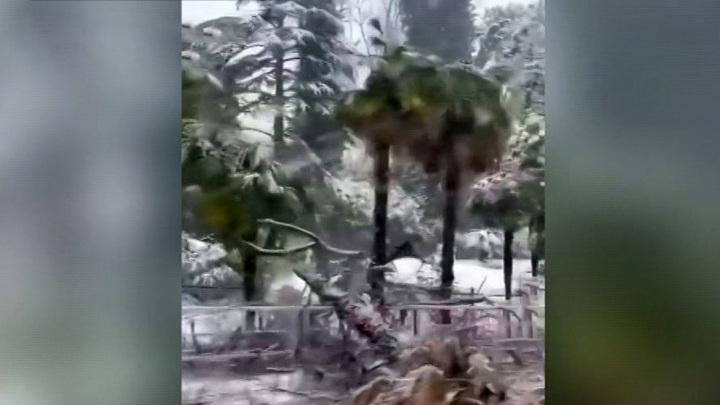 В Сочи из-за снегопада закрылся дендрарий