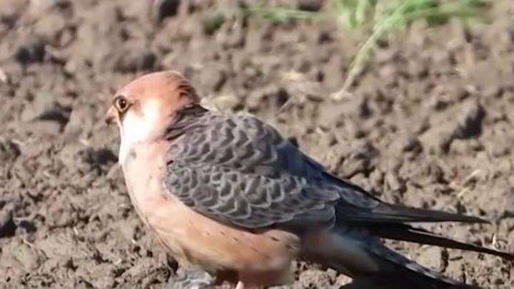 Союз охраны птиц России выбрал символ 2021 года
