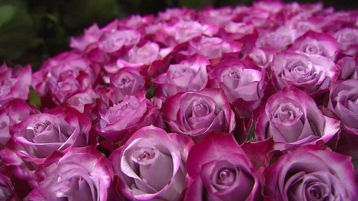 Матвиенко: цены на цветы кусаются, нужно поддержать российских цветоводов