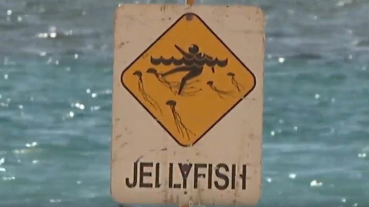 Подросток погиб после встречи с самой ядовитой медузой на планете
